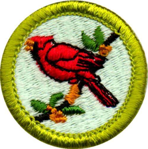 public merit badges boy scout troop 20 everett massachusetts. Black Bedroom Furniture Sets. Home Design Ideas